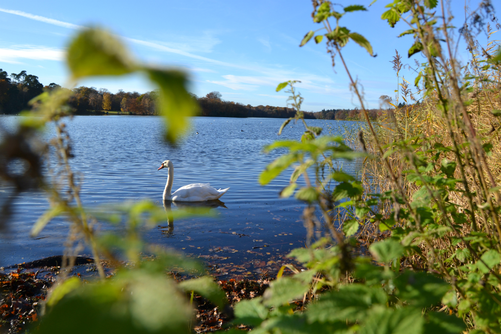 Virginia Water - lake