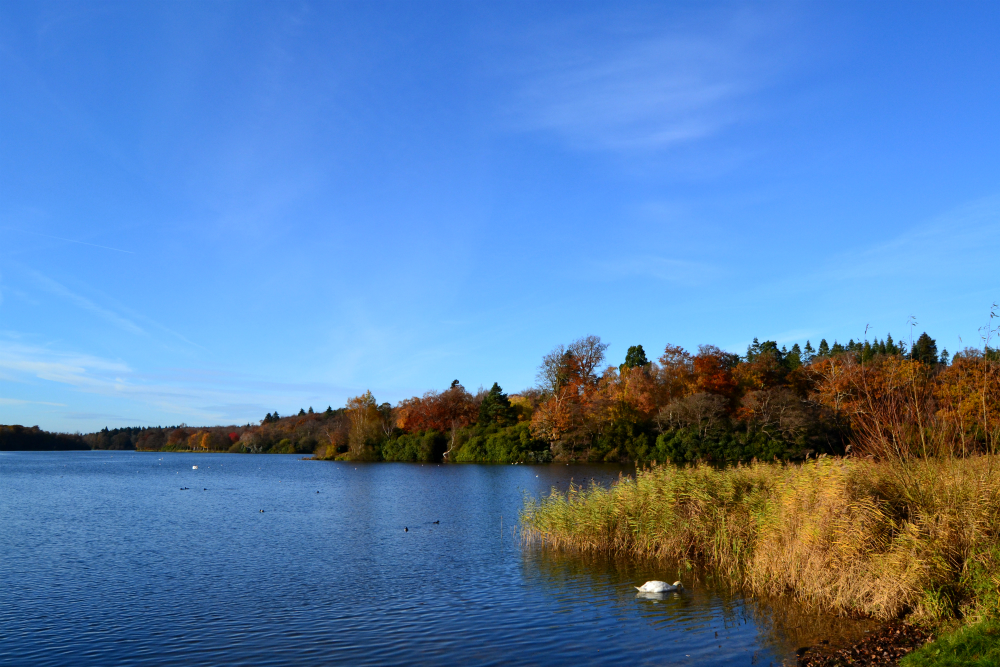 Virginia Water Park lake